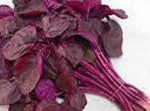 Benefits of red spinach